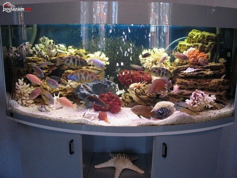 Индивидуальный подход.Запуск, оформление и переоформление дизайна аквариумов.  Доставка, монтаж и настройка...
